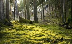 foret préhistoire alimentation chasse prehistoire historien nature