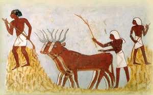 tombe mena agriculture blé vaches nourriture cuisine histoire alimentation egypte antique egyptien pharaon