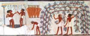 Tombe nakht vin vendange egypte alimentation histoire vinification foulage raisin grappe antique egyptien