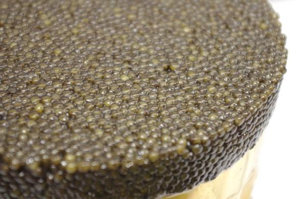 Kaviari caviar esturgeon noir oeufs elevage sauvage maison oscietre baeri beluga schrenki bulgarie prestige luxe chine