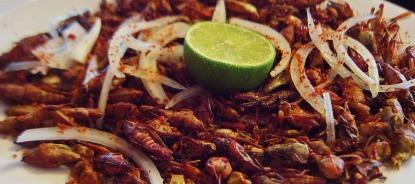 les insectes dans notre assiette